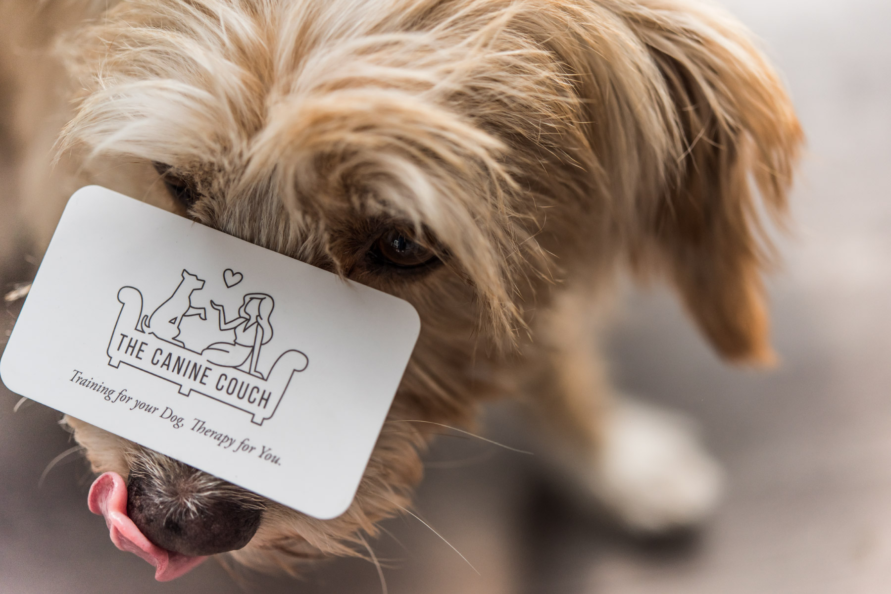 Puppy with business card on nose