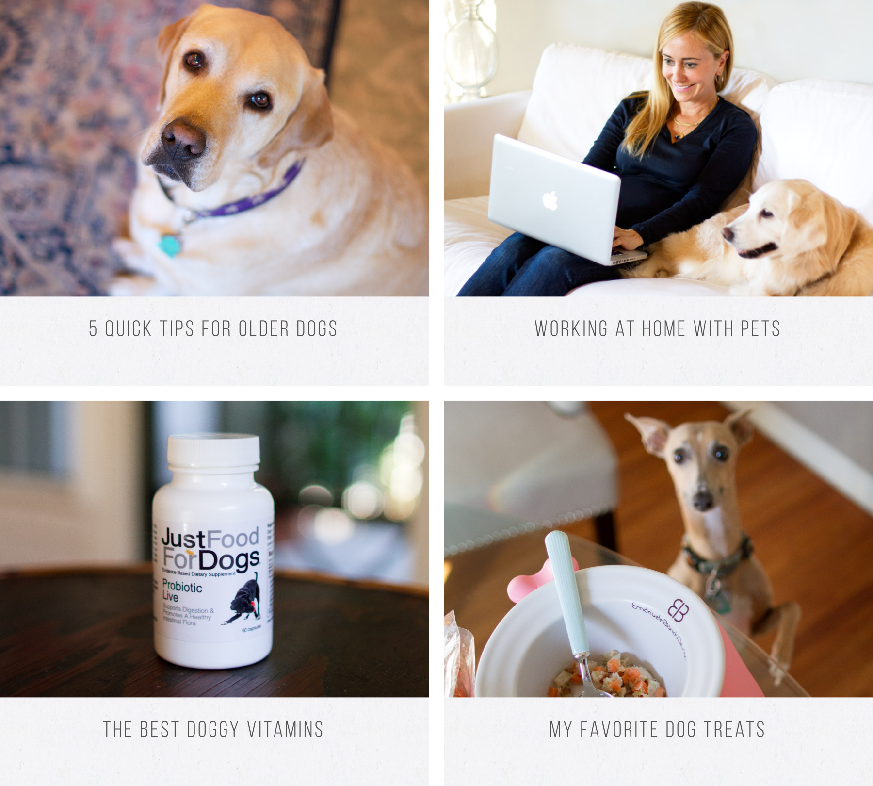 Cute dog imagery for a blog