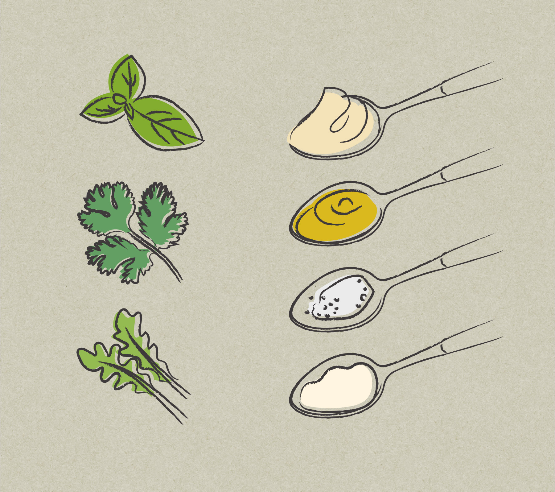 Illustrations of spices and herbs