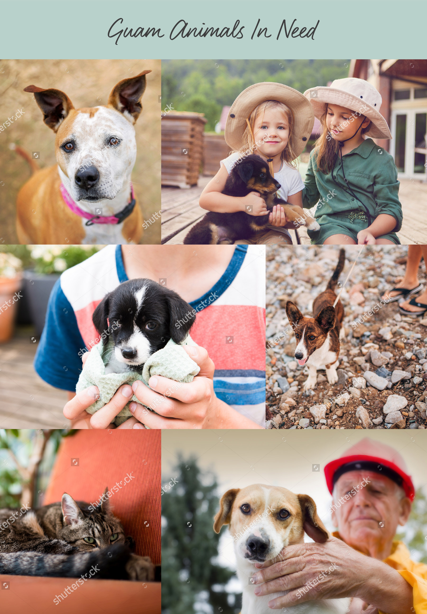 Collage of animals being aided